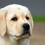 Dog Training - Home Based Business